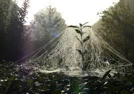 Spider web 1