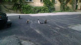 Cat_coalition_2